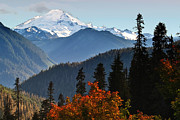 Mt Baker Prints - Mt Baker from the Yellow Aster Trail Print by Alvin Kroon