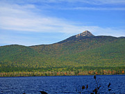 Sandwich Mountains Posters - Mt Chocorua Poster by Barbara McDevitt
