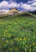 Helen Framed Prints - Mt. Cirque, Wildflowers In The Helen Framed Print by Darwin Wiggett