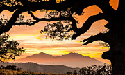 Oak Prints - Mt Diablo Framed By An Oak Tree Print by Marc Crumpler