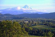 Mt Hood Prints - Mt. Hood and Hood River valley Oregon. Print by Gino Rigucci