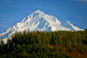 Mt Hood Prints - Mt Hood in Winter Print by Albert Seger
