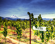 Syrah Photo Metal Prints - Mt Hood Winery Metal Print by Vicki Jauron