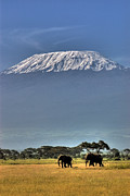 Mt.kilimanjaro Prints - Mt Kilimanjaro with Elephants Print by Jaspal  Sembi