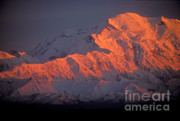 Denali National Park Photos - Mt. McKinley Sunset by Sandra Bronstein