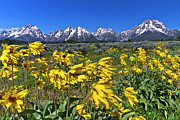 Jackson Prints - Mt. Moran In Grand Teton National Park Print by Rob Daugherty - RobsWildlife.com