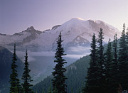 Snow-covered Landscape Posters - Mt Rainier As Seen At Sunrise Mt Poster by Tim Fitzharris