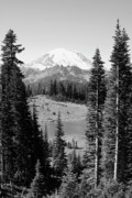 Tipsoo Framed Prints - Mt Rainier from Chinook Pass Framed Print by David Patterson