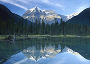 Snow-covered Landscape Prints - Mt Robson Highest Peak In The Canadian Print by Tim Fitzharris