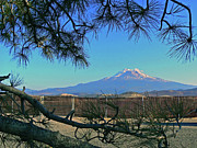 Mt Shasta At Weed  Print by Pamela Patch