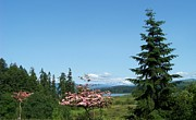 Dogwood Lake Prints - Mt St Helens in the Distance - A Panorama Print by Charles Robinson