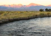 Owens River Posters - Mt Tom Sunrise Poster by Troy Montemayor