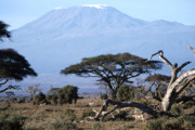Mt. Kilimanjaro Art - Mt.Kilimanjaro by Wade Worsley