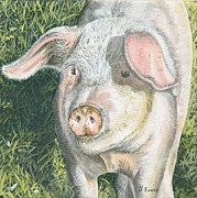 Pig Paintings - Mucky Pig by Frances Evans