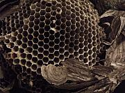 Anna Villarreal Garbis Art - Mudwasp Nest 6 by Anna Villarreal Garbis