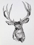Lana Tyler - Mule Deer Buck