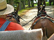 Digital Photography - Mule Driver by Lynn-Marie Gildersleeve
