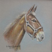 Dorothy Coatsworth Painting Prints - Mule Head Print by Dorothy Coatsworth