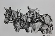 Amish Drawings Framed Prints - Mule Team Framed Print by Carolyn Valcourt