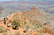 South Kaibab Trail Prints - Mules on a Switchback II Print by Julie Niemela