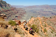 South Kaibab Trail Prints - Mules on a Switchback Print by Julie Niemela