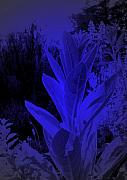 Plant Life Digital Art Prints - Mullein in the Moonlight Print by JoAnn SkyWatcher