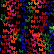 Square Art Photos - Multi Colored Butterfly Shaped Lights by Lotus Carroll