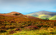 Nikon Metal Prints - Multicolored Hills of Wicklow I. Ireland Metal Print by Jenny Rainbow