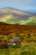 Shades Of Green Prints - Multicolored Hills of Wicklow. Ireland Print by Jenny Rainbow