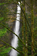 Ruth Gorge Framed Prints - Multnomah Falls Framed Print by R Lynley