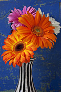 Daisies Posters - Mums in striped vase Poster by Garry Gay