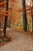 Fall Road Posters - Munich Foliage Poster by Frenzypic By Chris Hoefer