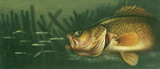 Jon Q Wright Posters - Murky Water Walleye Poster by JQ Licensing