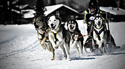 Winter Landscape Photo Prints - Mushing Print by Daniel Wildi Photography
