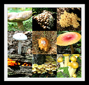 Variety Photos Posters - Mushroom Collage Poster by Barbara S Nickerson