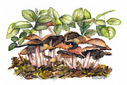 Toadstools Framed Prints - Mushroom Forest Framed Print by Terry Taylor