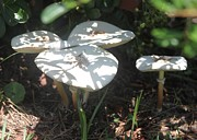 Mushroom Sun Patterns Print by Jeanne Kay Juhos