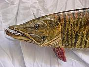 Realistic Reliefs - Musky Two Close Up by Lisa Ruggiero