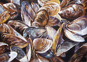 Shells Drawings - Musseling In by Sherry Egger