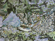 Karen Merry - Mussels and Morsels