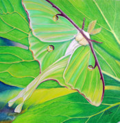 Leaves Pastels Posters - Must Be Dreaming Poster by Amy Tyler