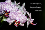 Greeting Cards With Text Posters - Must Have Orchids Poster by Andrea  OConnell