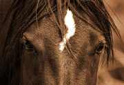 Wild Horses Prints - Mustang Print by Heather Swan