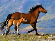 Filly Paintings - Mustang Mare and Foal by Shere Crossman