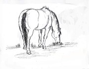 Grazing Horse Posters - Mustang Mare field sketch Poster by Dawn Senior-Trask