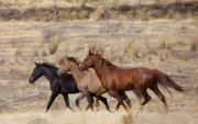 Sagebrush Framed Prints - Mustang Trio Framed Print by Mike  Dawson