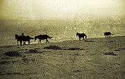 Roaming Photo Posters - Mustangs Poster by Betsy A Cutler East Coast Barrier Islands