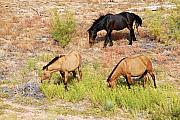 Trio Prints - Mustangs Print by Larry Ricker