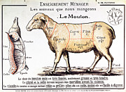 Kitchen Decor Drawings Prints - Mutton Print by French School