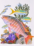 Coral Reef Paintings - Mutton Snapper reef by Carey Chen